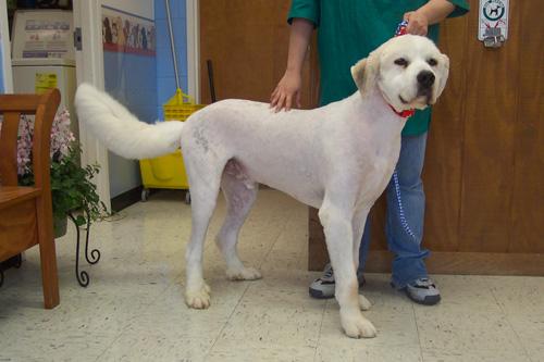 Dog Community, Dog Pictures, Dog Forum & Information – Dog.community ...