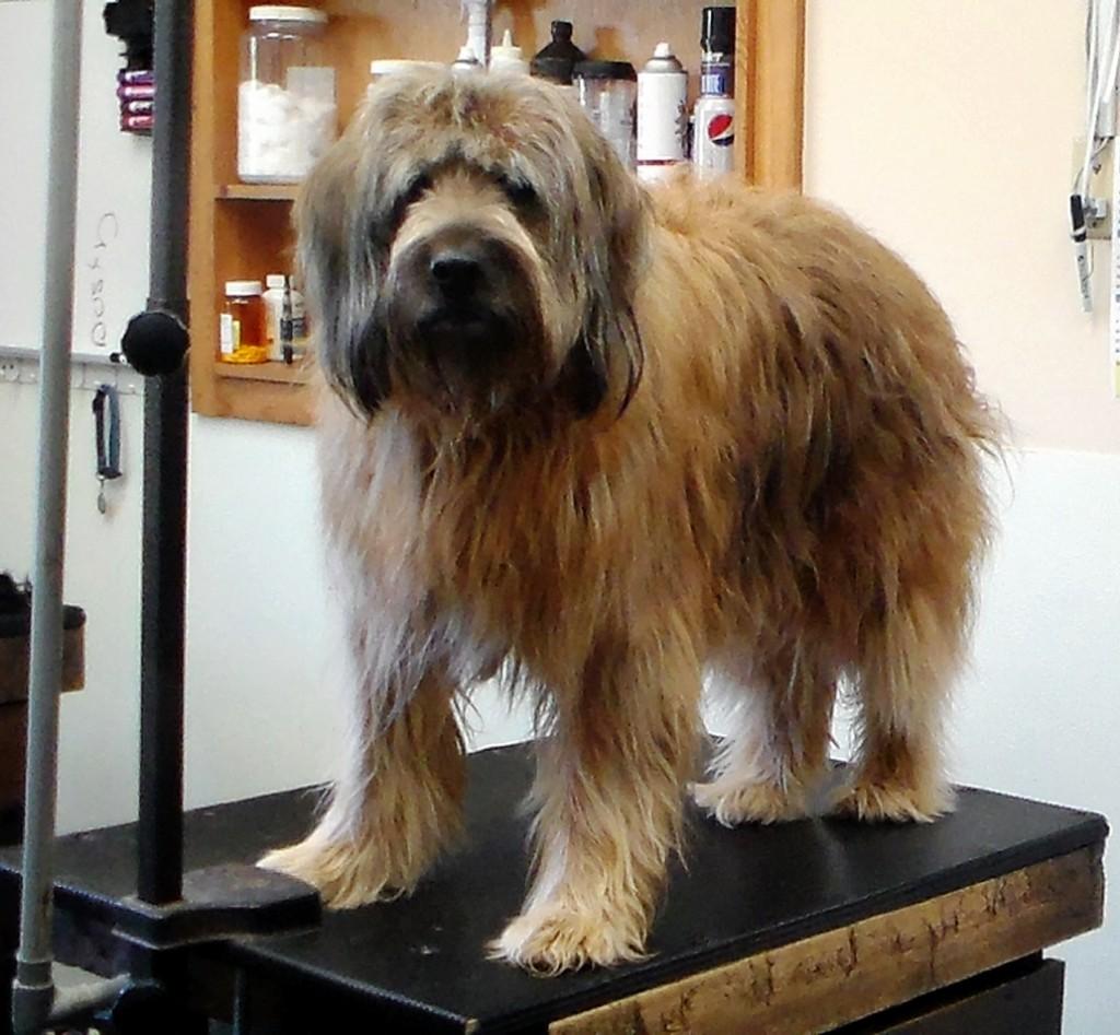 Haircuts Pet Motel And Salon
